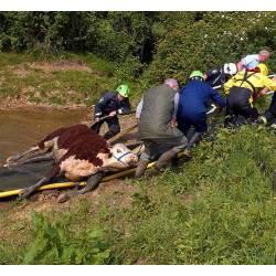 Recupero animali MFC Animal Rescue Path